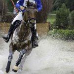 Eventing Horse