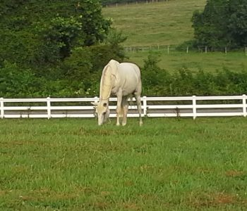 successful horse rehab