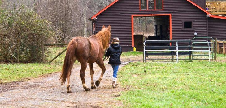 Walking Horse