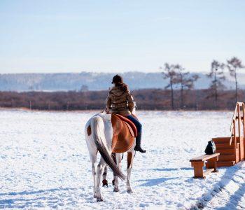 Winter Horse Warmup