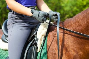 holding the reins dressage