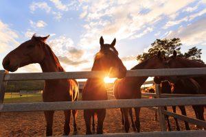 Boarding Horses