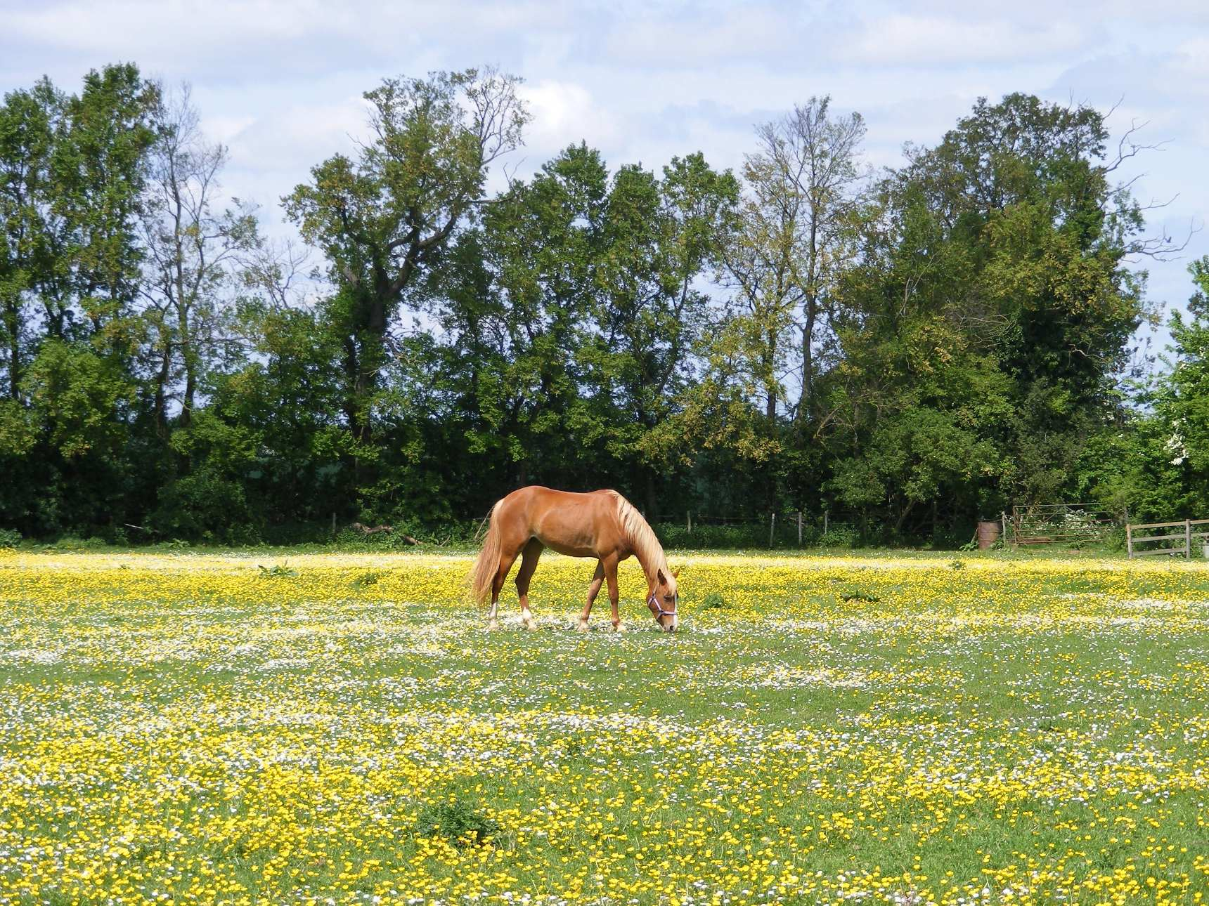 Horse Spring Grass: Problems & Solutions - EuroXciser
