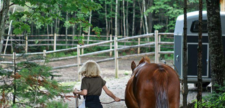 Equine Senior Citizen