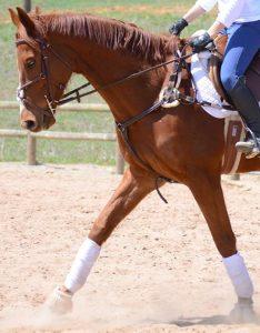 ottb horse