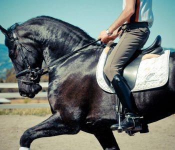 Horse Fitness Program