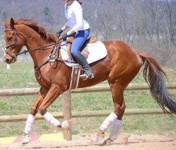 rider symmetry