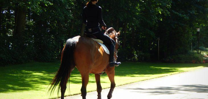 Jumper Rider