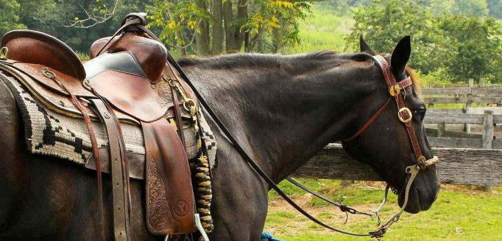 Western Horse Fitness