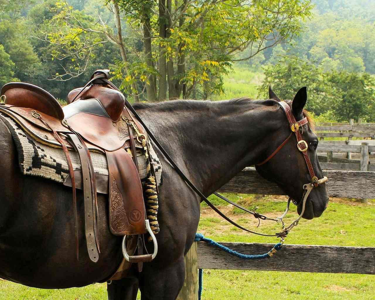 Western Horse Fitness Euroxciser
