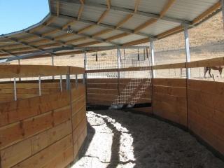 Horse Exerciser Track