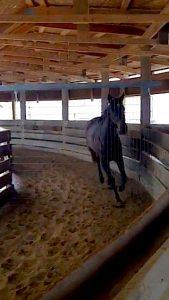 horse in euroxciser