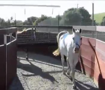 EuroXciser Horse